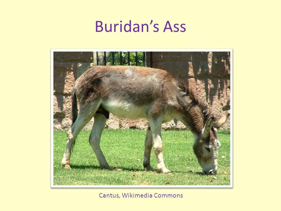 Buridans Ass Cantus, Wikimedia Commons