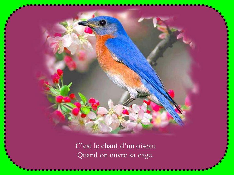 Cest le chant dun oiseau Quand on ouvre sa cage.