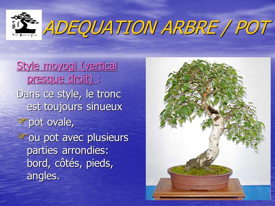 ADEQUATION ARBRE / POT Style moyogi (vertical presque droit) : Dans ce style, le tronc est toujours sinueux F pot ovale, F ou pot avec plusieurs parties arrondies: bord, côtés, pieds, angles.