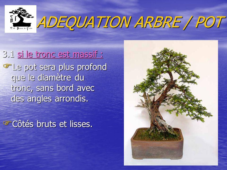 ADEQUATION ARBRE / POT 3.1 si le tronc est massif : F Le pot sera plus profond que le diamètre du tronc, sans bord avec des angles arrondis.
