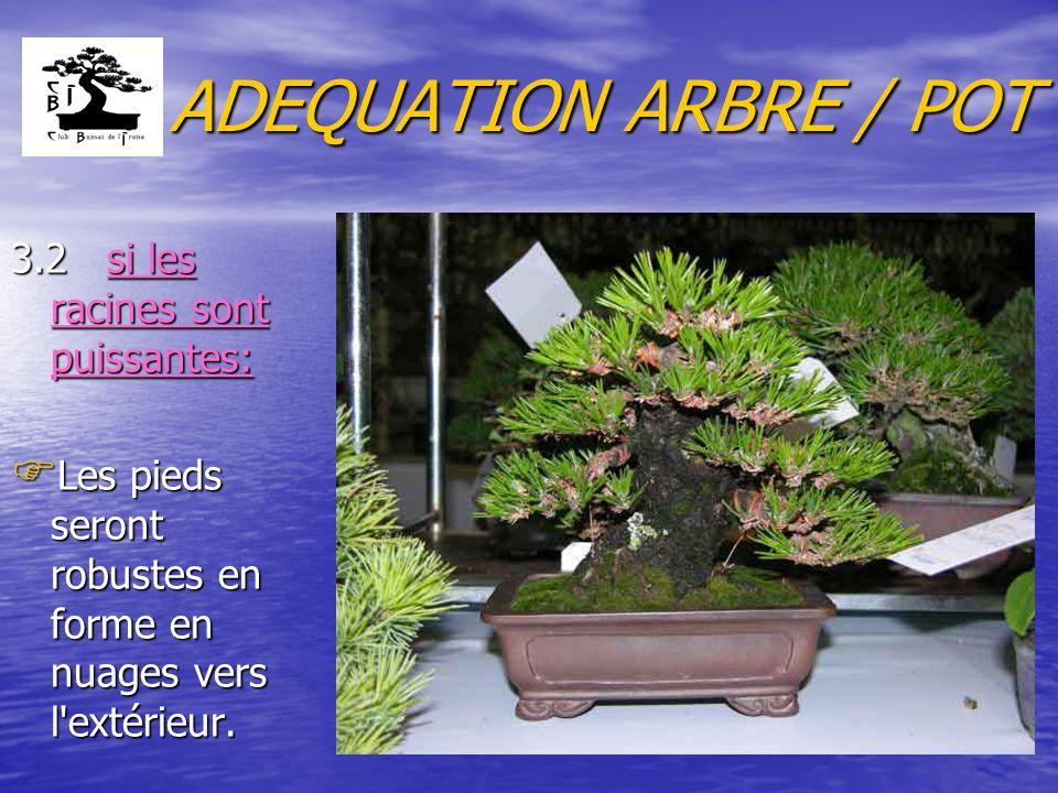 ADEQUATION ARBRE / POT 3.2 si les racines sont puissantes: F Les pieds seront robustes en forme en nuages vers l extérieur.