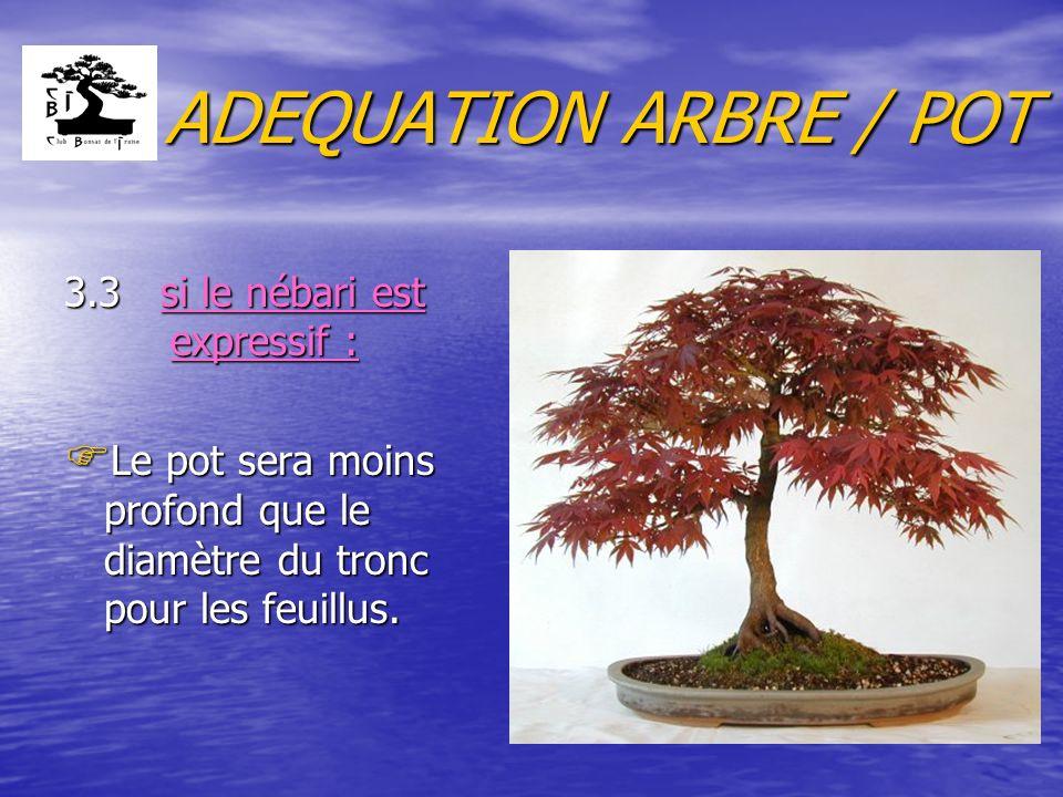 ADEQUATION ARBRE / POT 3.3 si le nébari est expressif : F Le pot sera moins profond que le diamètre du tronc pour les feuillus.