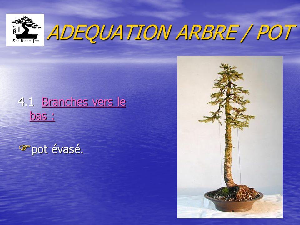 ADEQUATION ARBRE / POT 4.1 Branches vers le bas : F pot évasé.