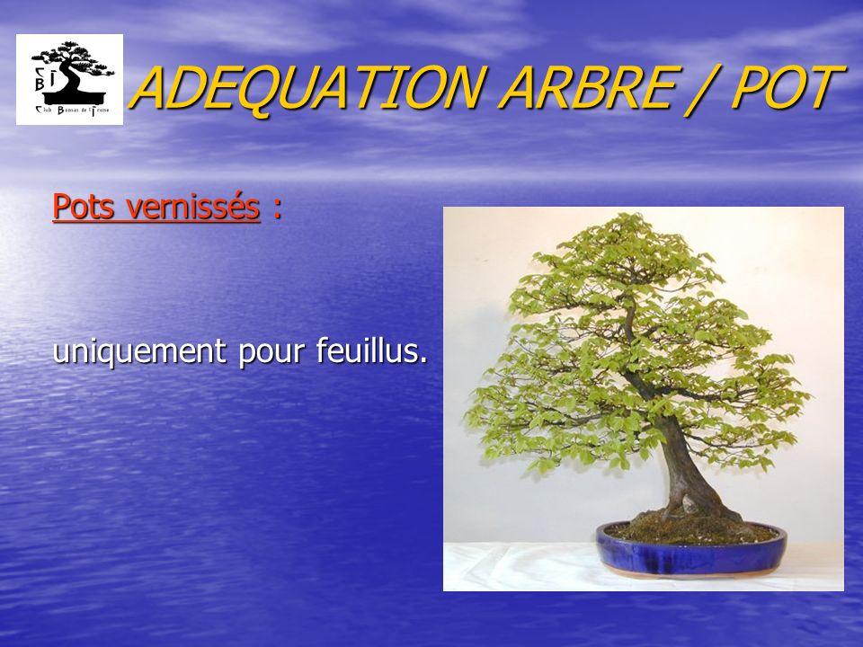 ADEQUATION ARBRE / POT Pots vernissés : uniquement pour feuillus.