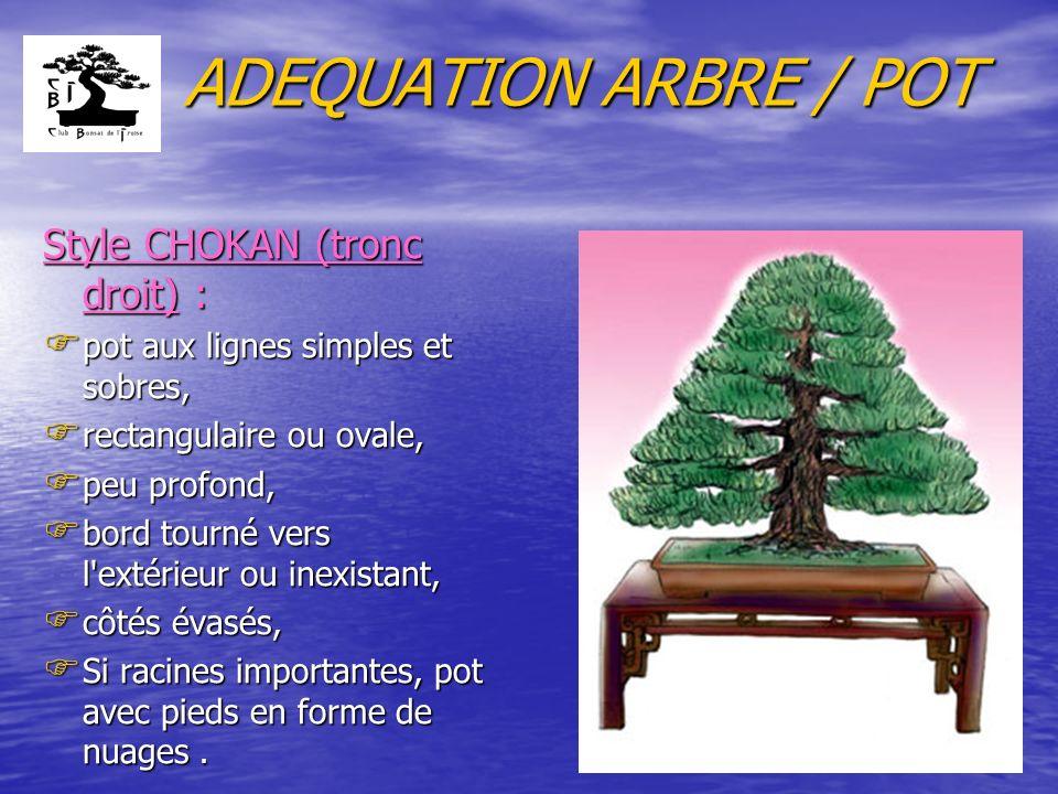 ADEQUATION ARBRE / POT Style CHOKAN (tronc droit) : F pot aux lignes simples et sobres, F rectangulaire ou ovale, F peu profond, F bord tourné vers l'