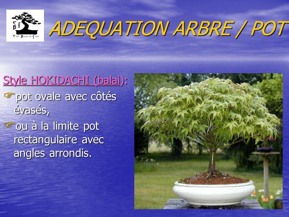 ADEQUATION ARBRE / POT 3.5 si le tronc est creux (sabamiki) : F pot évasé.