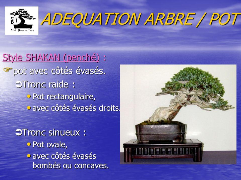 ADEQUATION ARBRE / POT Style SHAKAN (penché) : F pot avec côtés évasés. ÜTronc raide : Pot rectangulaire, Pot rectangulaire, avec côtés évasés droits.