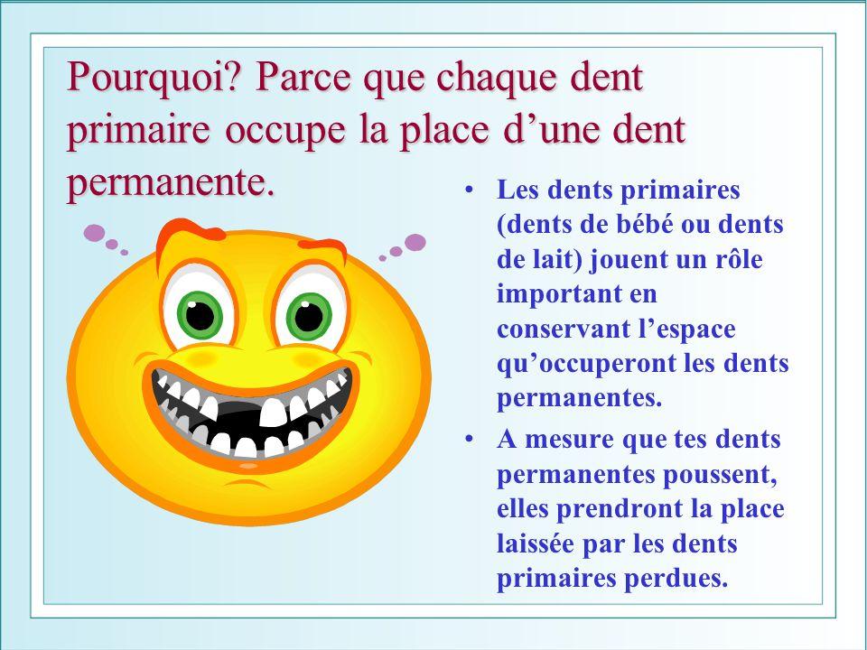 Pourquoi? Parce que chaque dent primaire occupe la place dune dent permanente. Les dents primaires (dents de bébé ou dents de lait) jouent un rôle imp