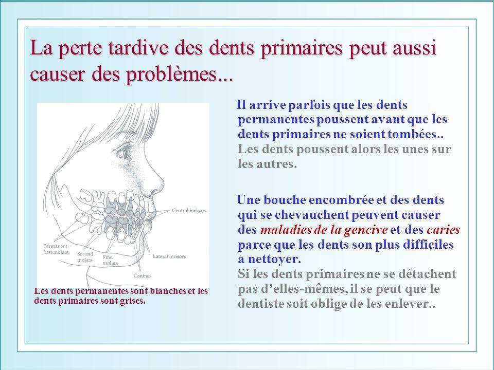 La perte tardive des dents primaires peut aussi causer des problèmes... Il arrive parfois que les dents permanentes poussent avant que les dents prima