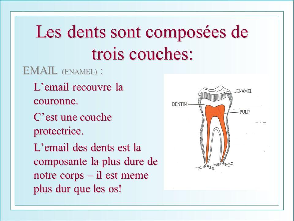 Les dents sont composées de trois couches: EMAIL (ENAMEL) : Lemail recouvre la couronne. Cest une couche protectrice. Lemail des dents est la composan