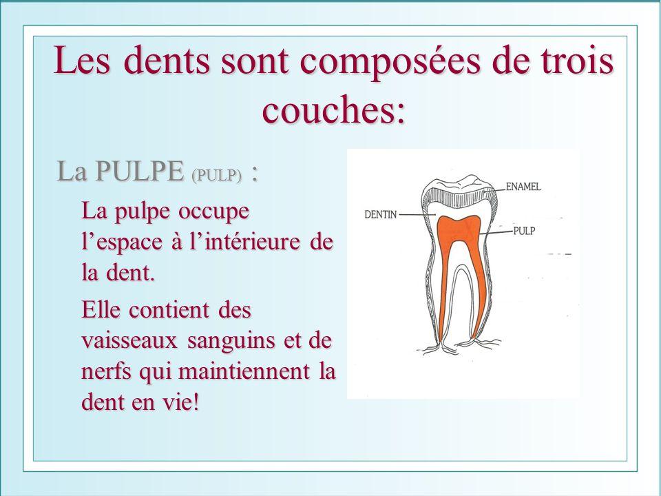 Les dents sont composées de trois couches: La PULPE (PULP) : La pulpe occupe lespace à lintérieure de la dent. La pulpe occupe lespace à lintérieure d