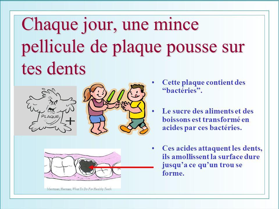 Chaque jour, une mince pellicule de plaque pousse sur tes dents Cette plaque contient des bactéries. Le sucre des aliments et des boissons est transfo