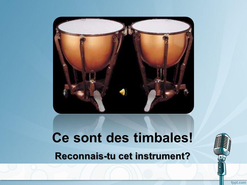 Ce sont des maracas! Reconnais-tu cet instrument?