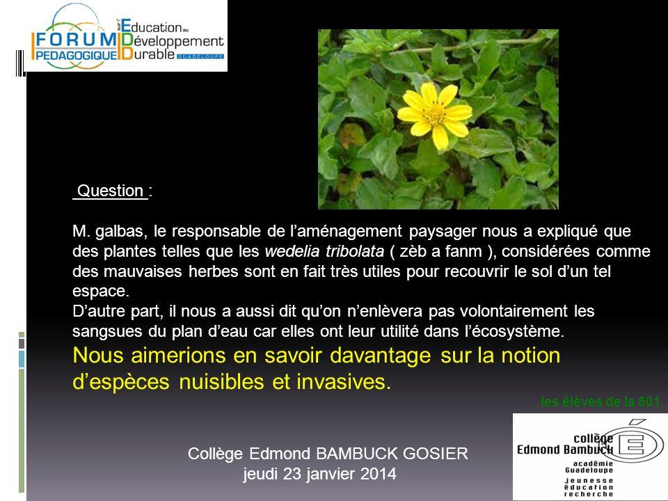 Collège Edmond BAMBUCK GOSIER jeudi 23 janvier 2014 Question : M. galbas, le responsable de laménagement paysager nous a expliqué que des plantes tell