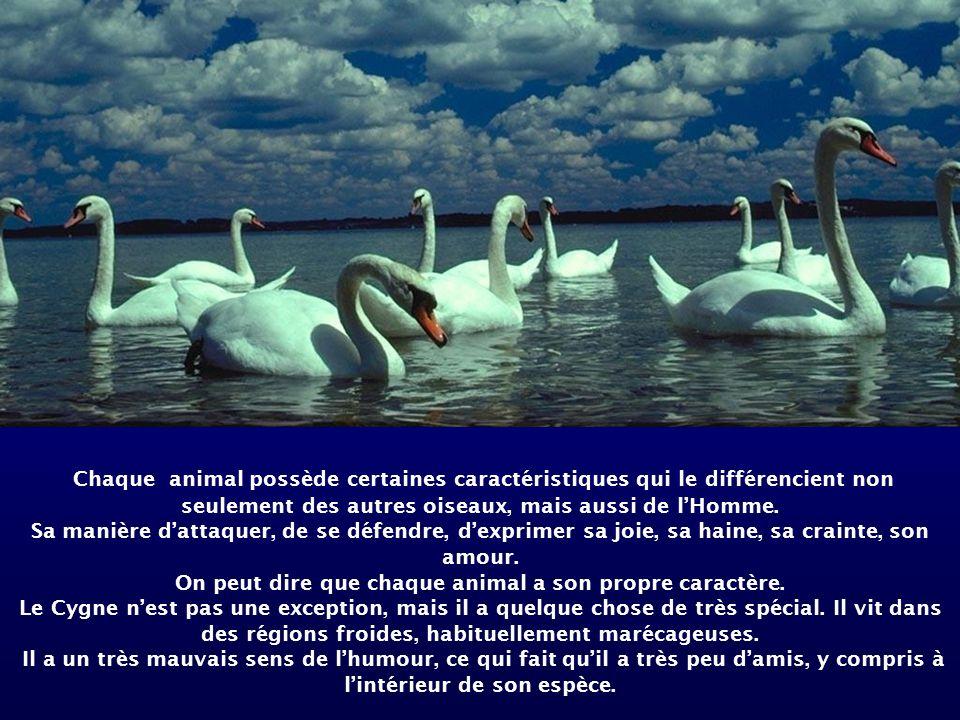 Chaque animal possède certaines caractéristiques qui le différencient non seulement des autres oiseaux, mais aussi de lHomme.