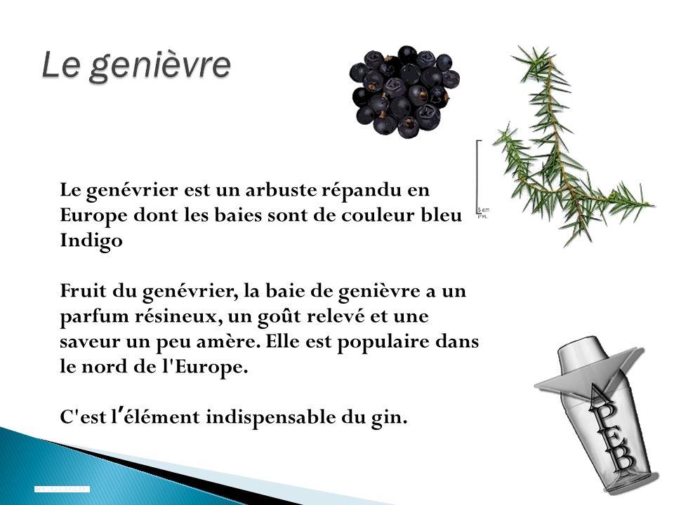 Le genévrier est un arbuste répandu en Europe dont les baies sont de couleur bleu Indigo Fruit du genévrier, la baie de genièvre a un parfum résineux, un goût relevé et une saveur un peu amère.