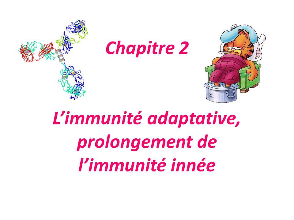 Chapitre 2 Limmunité adaptative, prolongement de limmunité innée