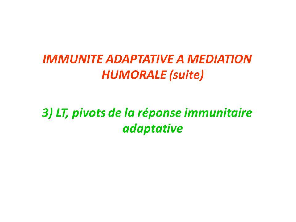 IMMUNITE ADAPTATIVE A MEDIATION HUMORALE (suite) 3) LT, pivots de la réponse immunitaire adaptative