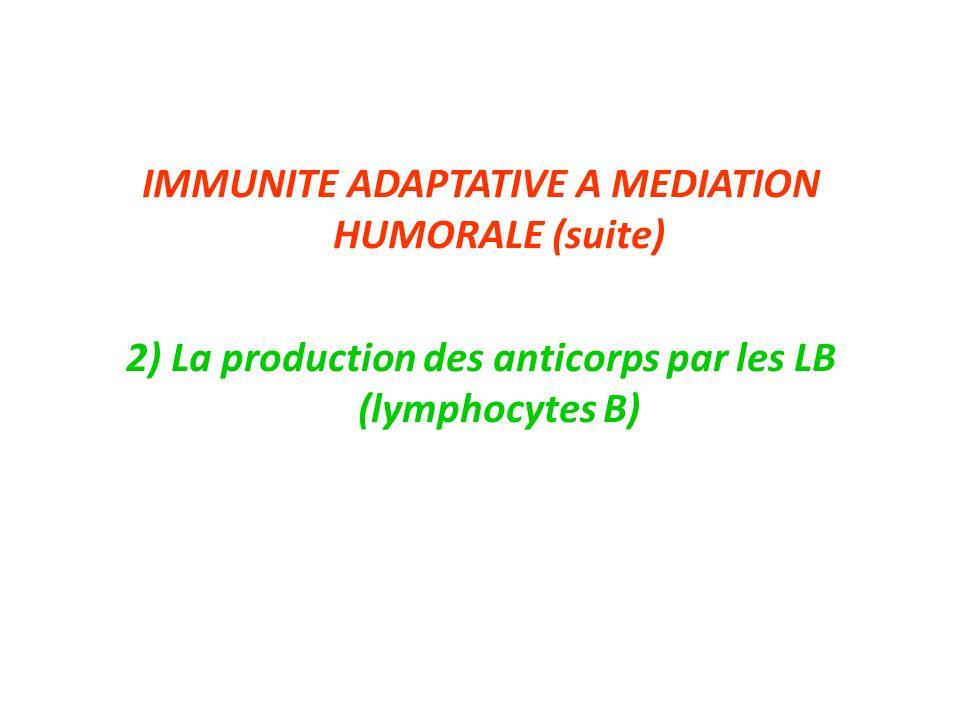 IMMUNITE ADAPTATIVE A MEDIATION HUMORALE (suite) 2) La production des anticorps par les LB (lymphocytes B)