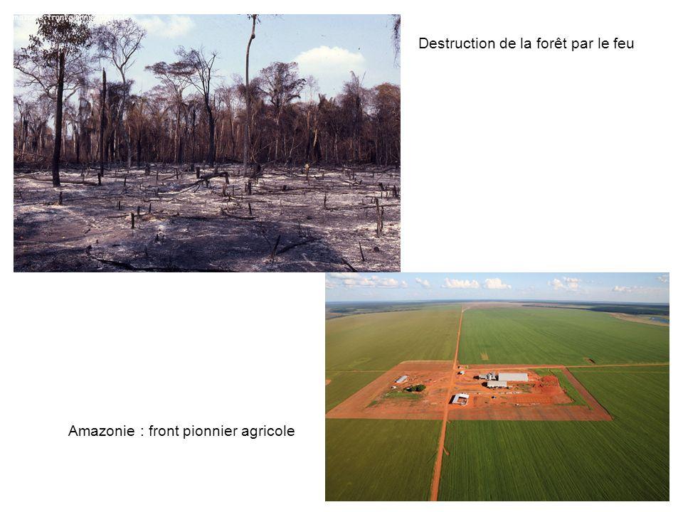 Destruction de la forêt par le feu Amazonie : front pionnier agricole