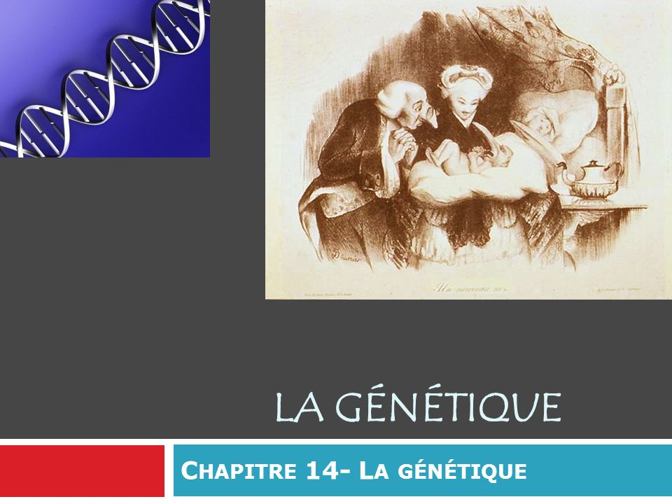 L HÉRÉDITÉ Transmission des caractères héréditaires à la génération suivante : Caractère = propriété héréditaire qui varie dun individu à lautre et qui est observable