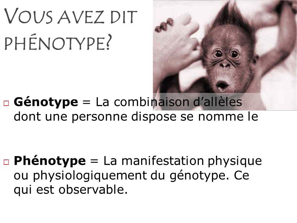V OUS AVEZ DIT PHÉNOTYPE ? Génotype = La combinaison dallèles dont une personne dispose se nomme le Phénotype = La manifestation physique ou physiolog