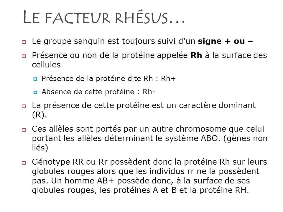 L E FACTEUR RHÉSUS … Le groupe sanguin est toujours suivi d'un signe + ou – Présence ou non de la protéine appelée Rh à la surface des cellules Présen