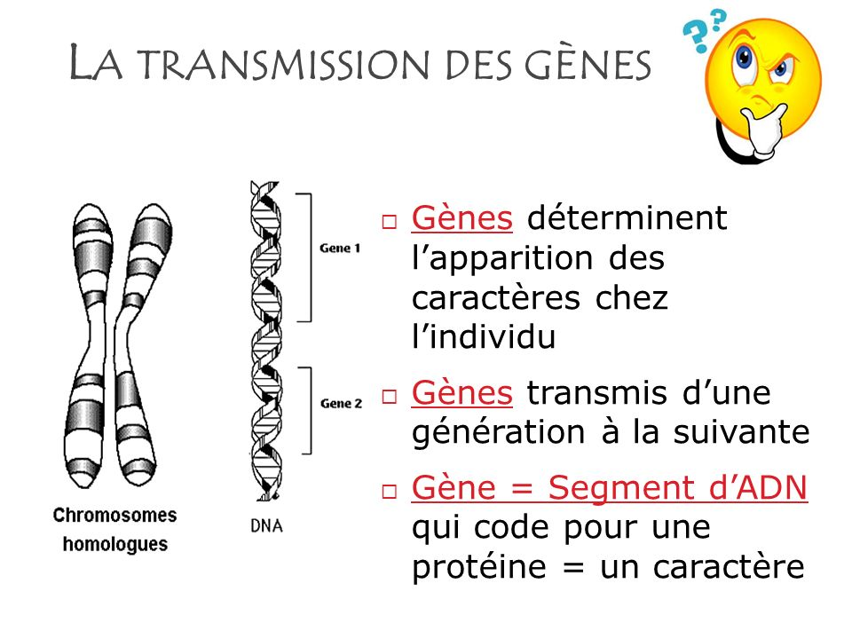 L A TRANSMISSION DES GÈNES Gènes déterminent lapparition des caractères chez lindividu Gènes transmis dune génération à la suivante Gène = Segment dAD