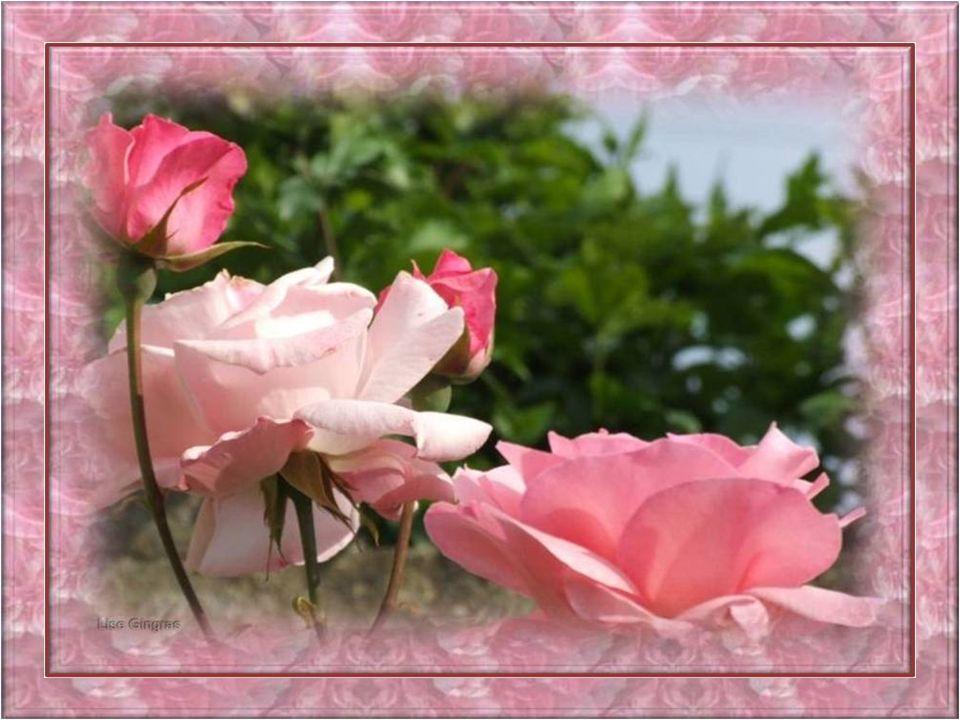 On dit que cette fleur sème beaucoup de joie Et que parfois sa vie est remplie démoi; Lardeur de son cœur est tourmentée Quand la nuit elle se sent ab