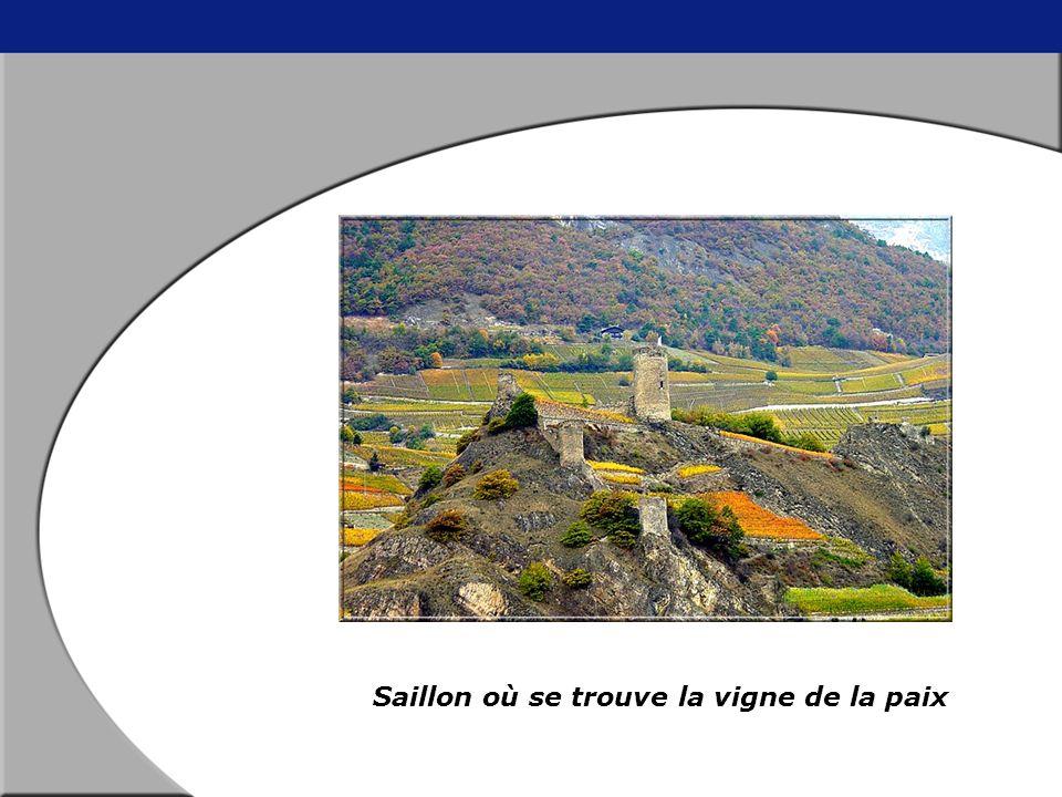 Voici la plaque commémorative De la plus petite vigne du monde Appelée la vigne de la Paix