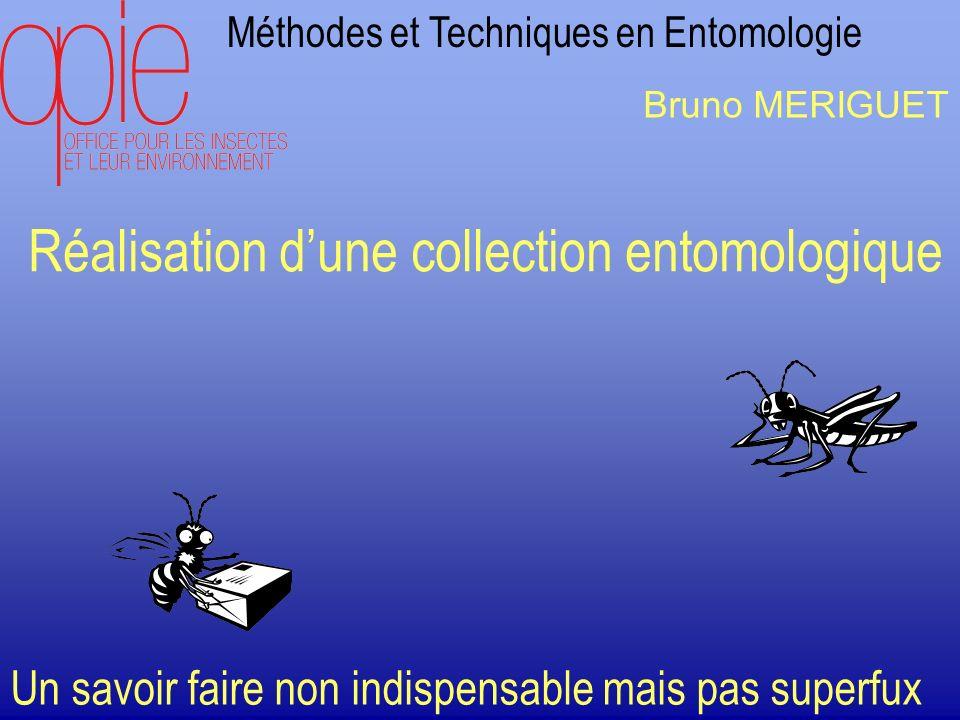 Méthodes et Techniques en Entomologie Réalisation dune collection entomologique Un savoir faire non indispensable mais pas superfux Bruno MERIGUET