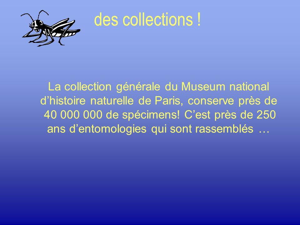 La collection générale du Museum national dhistoire naturelle de Paris, conserve près de 40 000 000 de spécimens! Cest près de 250 ans dentomologies q