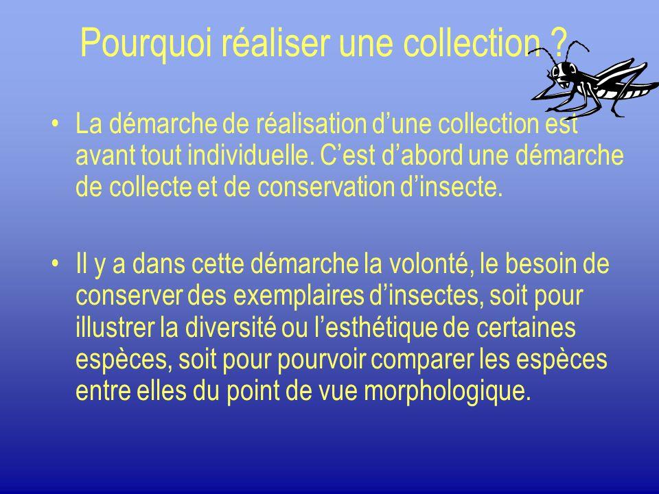 Pourquoi réaliser une collection ? La démarche de réalisation dune collection est avant tout individuelle. Cest dabord une démarche de collecte et de