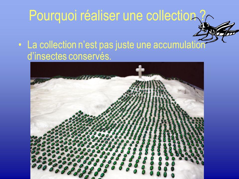 Pourquoi réaliser une collection ? La collection nest pas juste une accumulation dinsectes conservés.