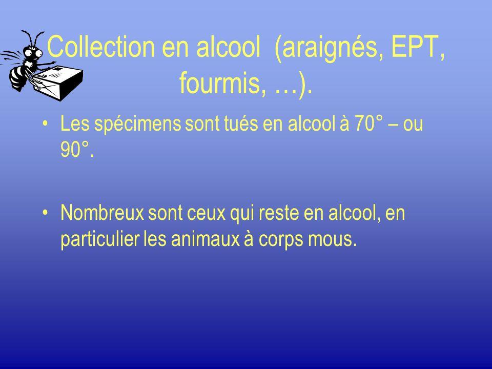 Collection en alcool (araignés, EPT, fourmis, …). Les spécimens sont tués en alcool à 70° – ou 90°. Nombreux sont ceux qui reste en alcool, en particu