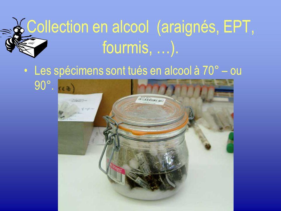 Collection en alcool (araignés, EPT, fourmis, …). Les spécimens sont tués en alcool à 70° – ou 90°.