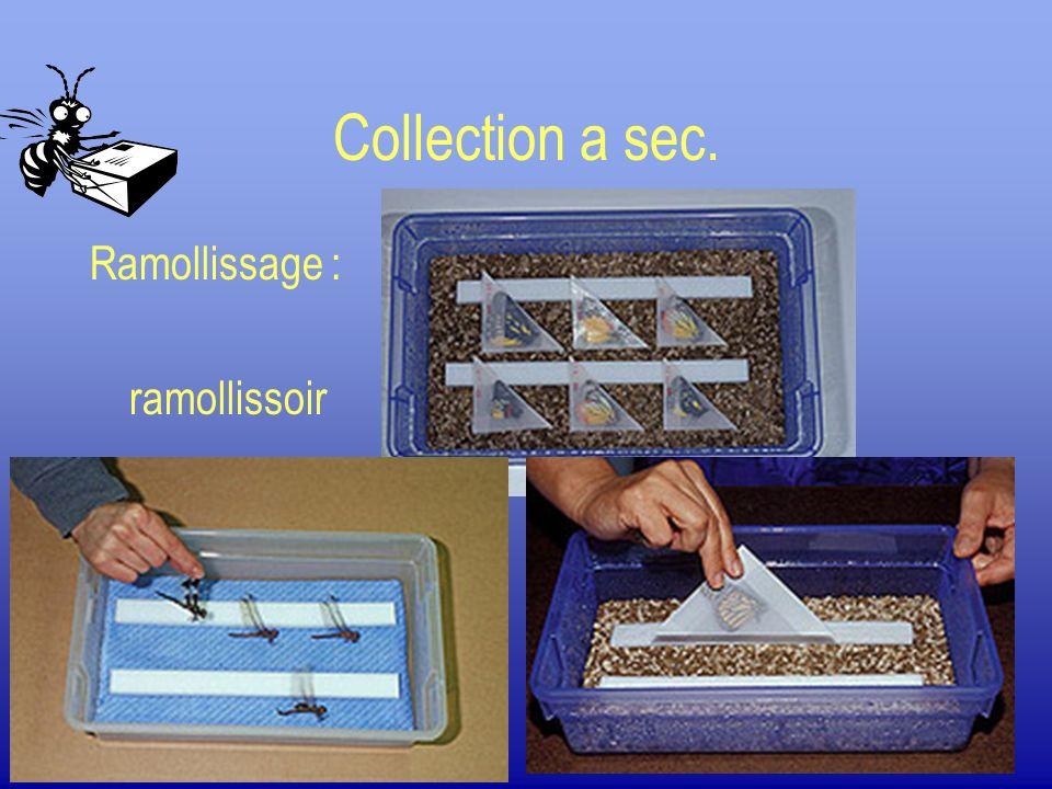 Collection a sec. Ramollissage : ramollissoir