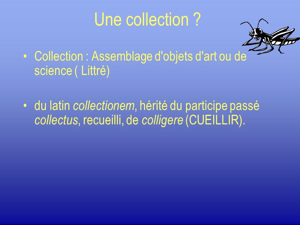 Entretien dune collection. Les dégâts liés à des parasites: Les anthères, Les psoques.