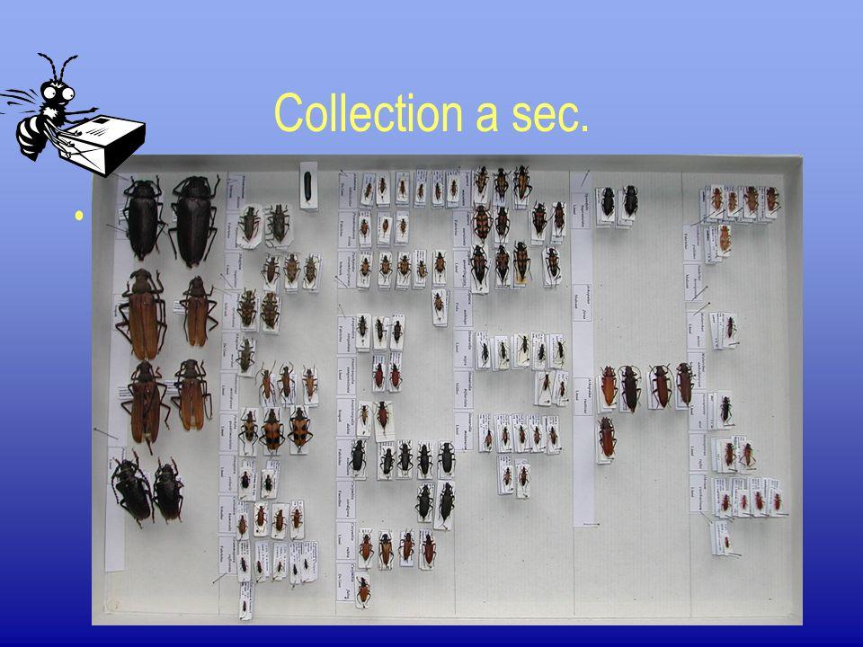 Collection a sec. Etiquetage et rangement