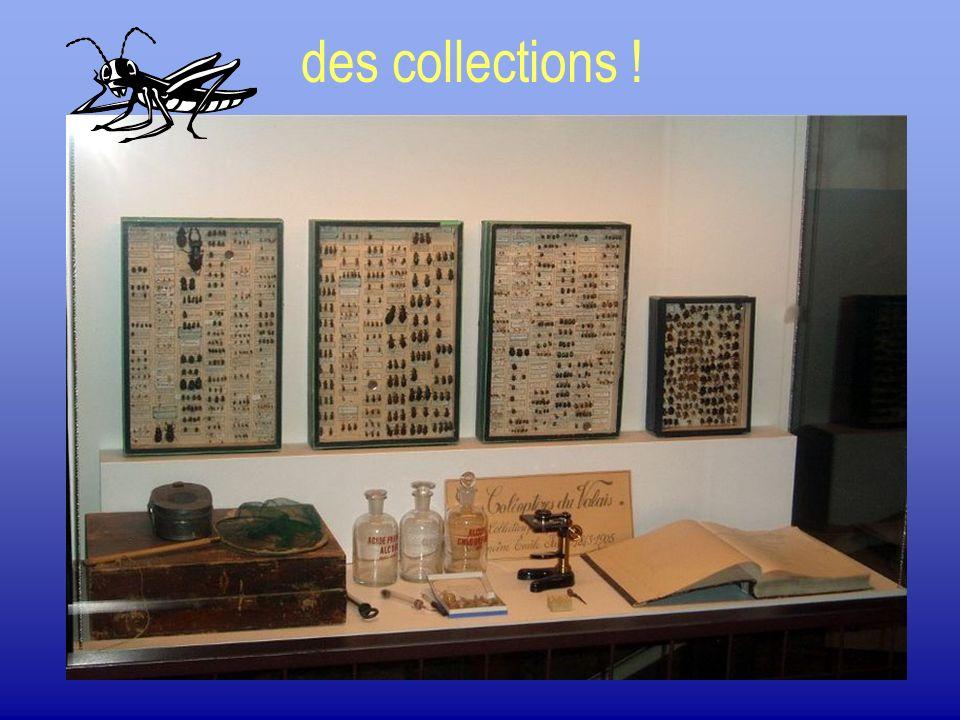 des collections !