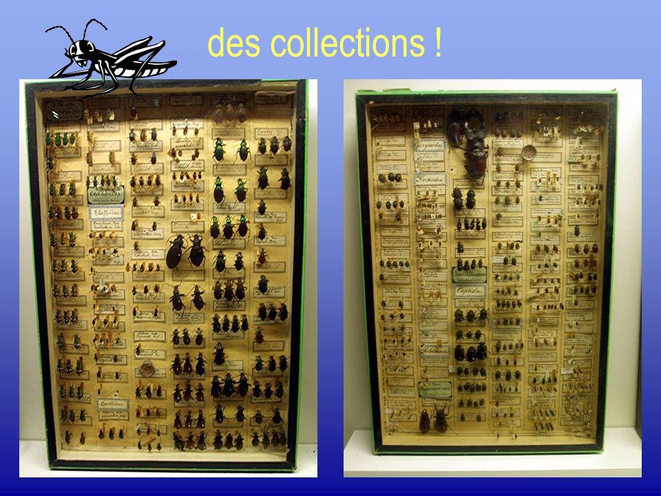 Collection a sec. Piquer ou coller ?