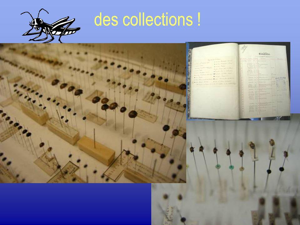 Collection a sec.Épingle entomologiques.