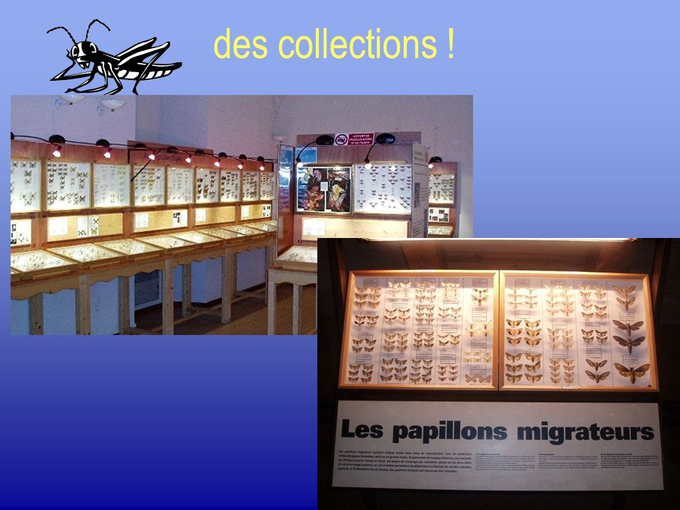 Gestion dune collection.