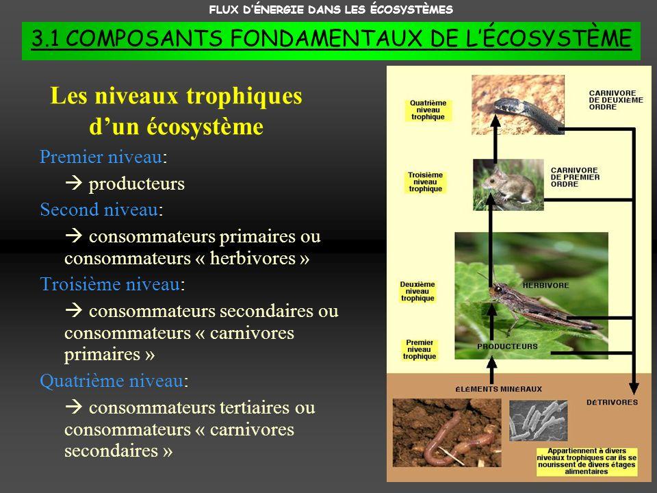 FLUX DÉNERGIE DANS LES ÉCOSYSTÈMES 3.1 COMPOSANTS FONDAMENTAUX DE LÉCOSYSTÈME Les niveaux trophiques dun écosystème Premier niveau: producteurs Second