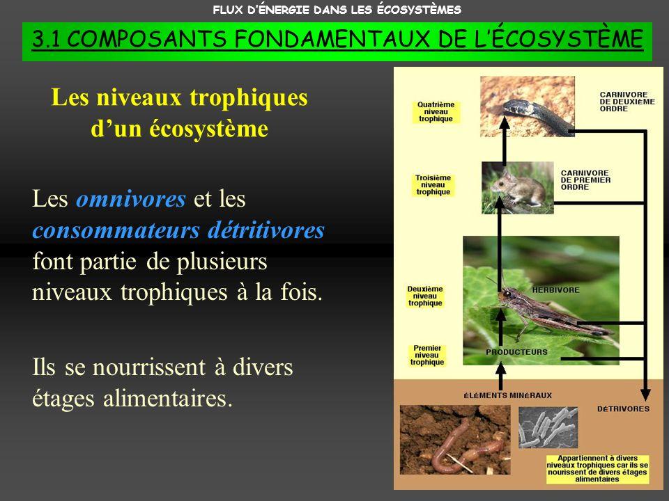 FLUX DÉNERGIE DANS LES ÉCOSYSTÈMES 3.1 COMPOSANTS FONDAMENTAUX DE LÉCOSYSTÈME Les niveaux trophiques dun écosystème Les omnivores et les consommateurs