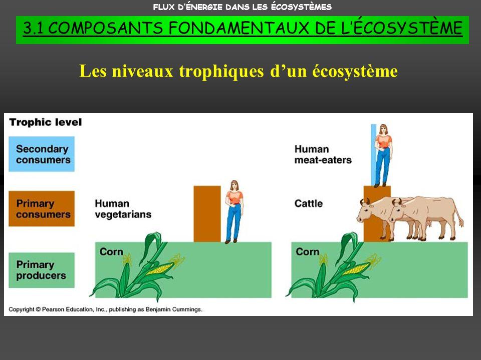 FLUX DÉNERGIE DANS LES ÉCOSYSTÈMES 3.1 COMPOSANTS FONDAMENTAUX DE LÉCOSYSTÈME Les niveaux trophiques dun écosystème