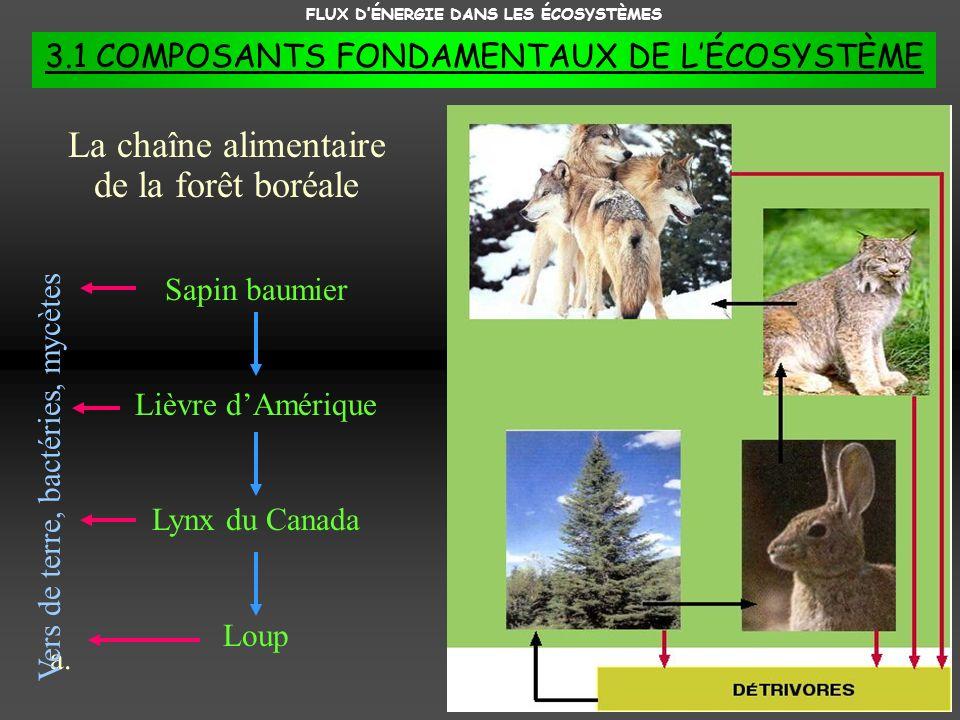 FLUX DÉNERGIE DANS LES ÉCOSYSTÈMES 3.1 COMPOSANTS FONDAMENTAUX DE LÉCOSYSTÈME a.a. La chaîne alimentaire de la forêt boréale Sapin baumier Lièvre dAmé