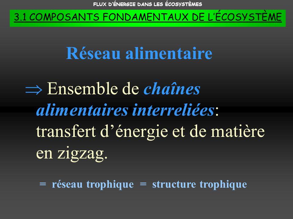 FLUX DÉNERGIE DANS LES ÉCOSYSTÈMES 3.1 COMPOSANTS FONDAMENTAUX DE LÉCOSYSTÈME Ensemble de chaînes alimentaires interreliées: transfert dénergie et de