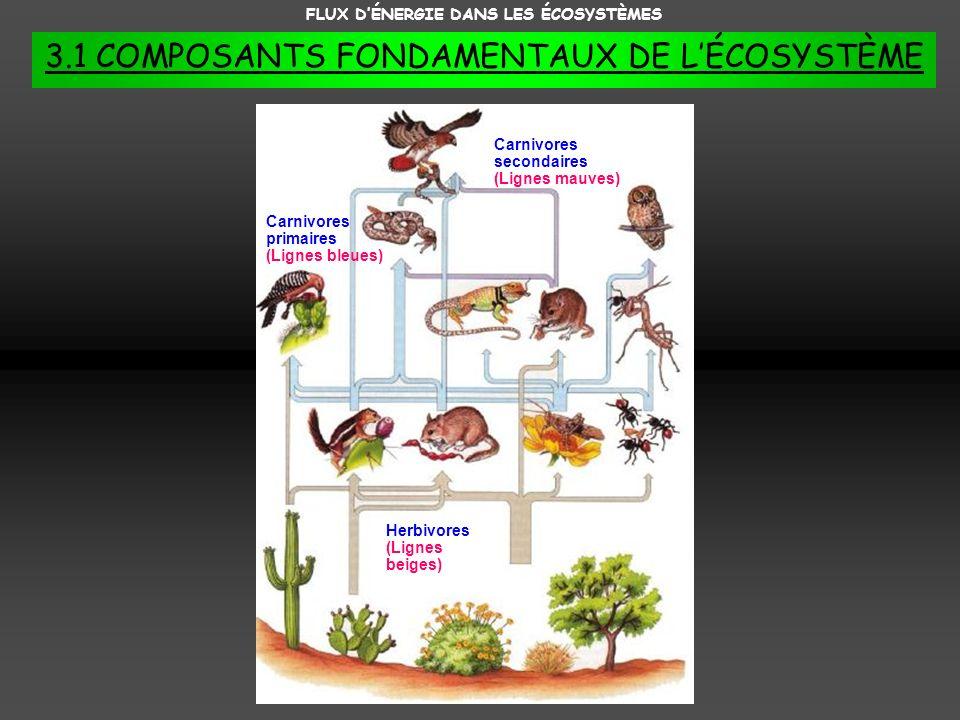 FLUX DÉNERGIE DANS LES ÉCOSYSTÈMES 3.1 COMPOSANTS FONDAMENTAUX DE LÉCOSYSTÈME Herbivores (Lignes beiges) Carnivores primaires (Lignes bleues) Carnivor