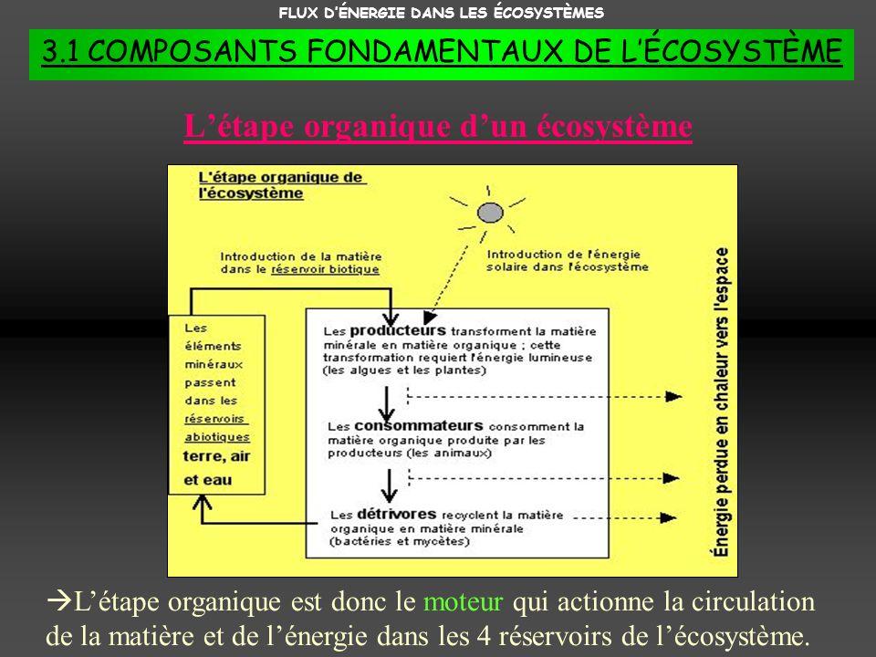 FLUX DÉNERGIE DANS LES ÉCOSYSTÈMES 3.1 COMPOSANTS FONDAMENTAUX DE LÉCOSYSTÈME Létape organique dun écosystème Létape organique est donc le moteur qui